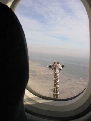 FlyingGirafe.jpg